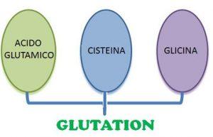 Como se forma el Glutation