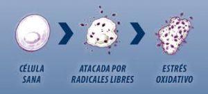 Radicales libres y estrés oxidativo