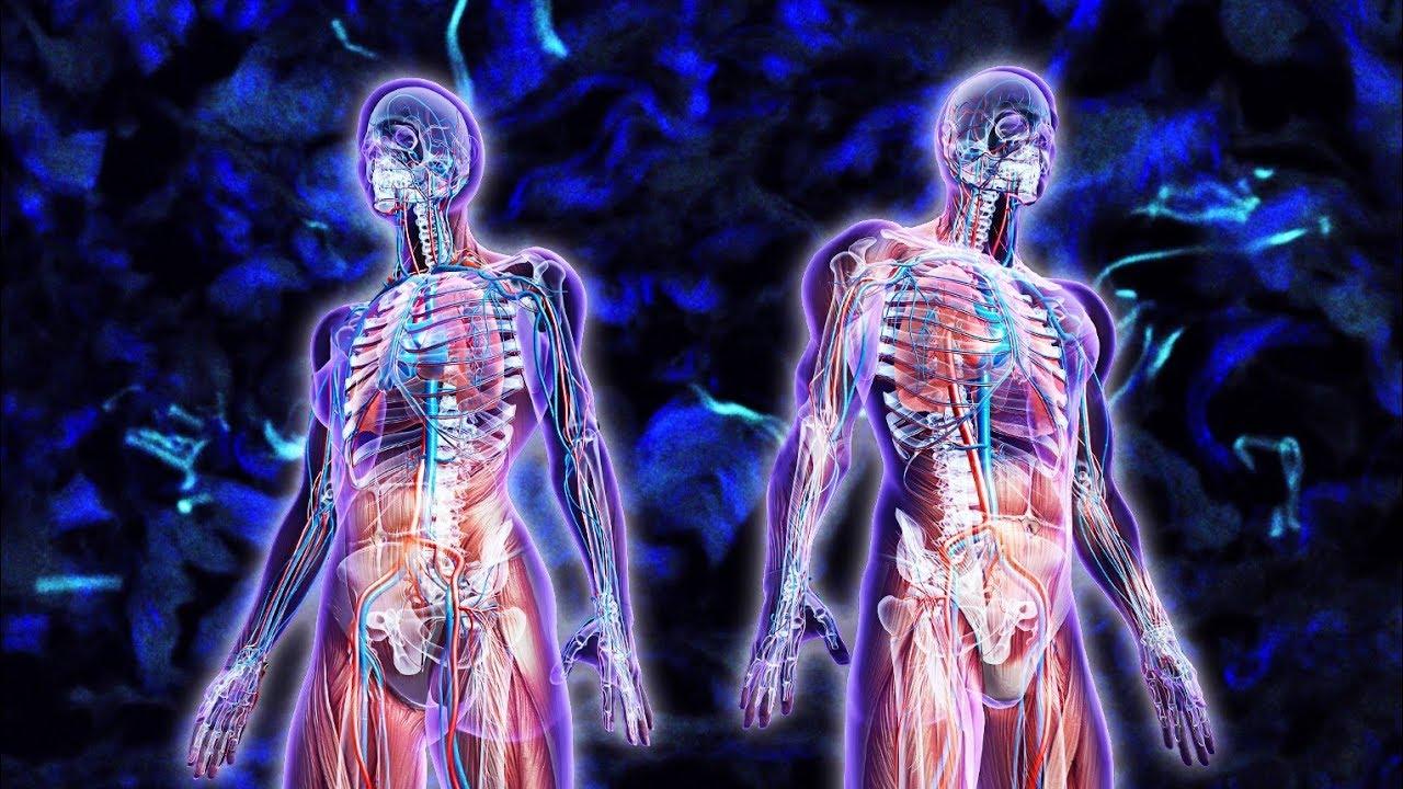 Cual es la diferencia entre Immunocal y el Factor de Transferencia